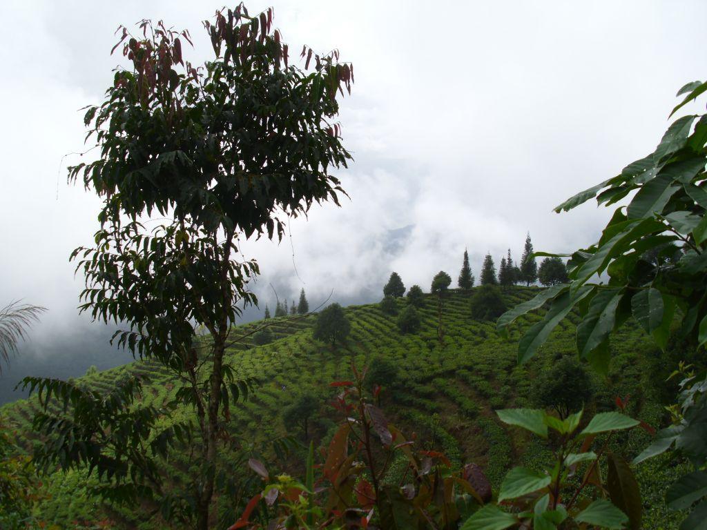 Чай с горы лаошань