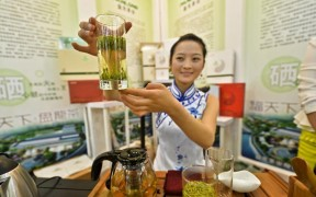 Превью записи «Tea Expo 2015»