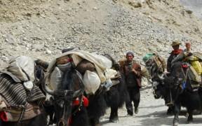 поставки пуэра в Тибет увеличатся